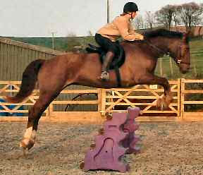 Liberty jumping in bitless bridle