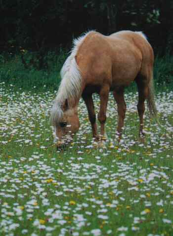 healthy grazing for horses