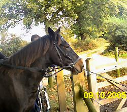 Paddy wearing beta bitless bridle